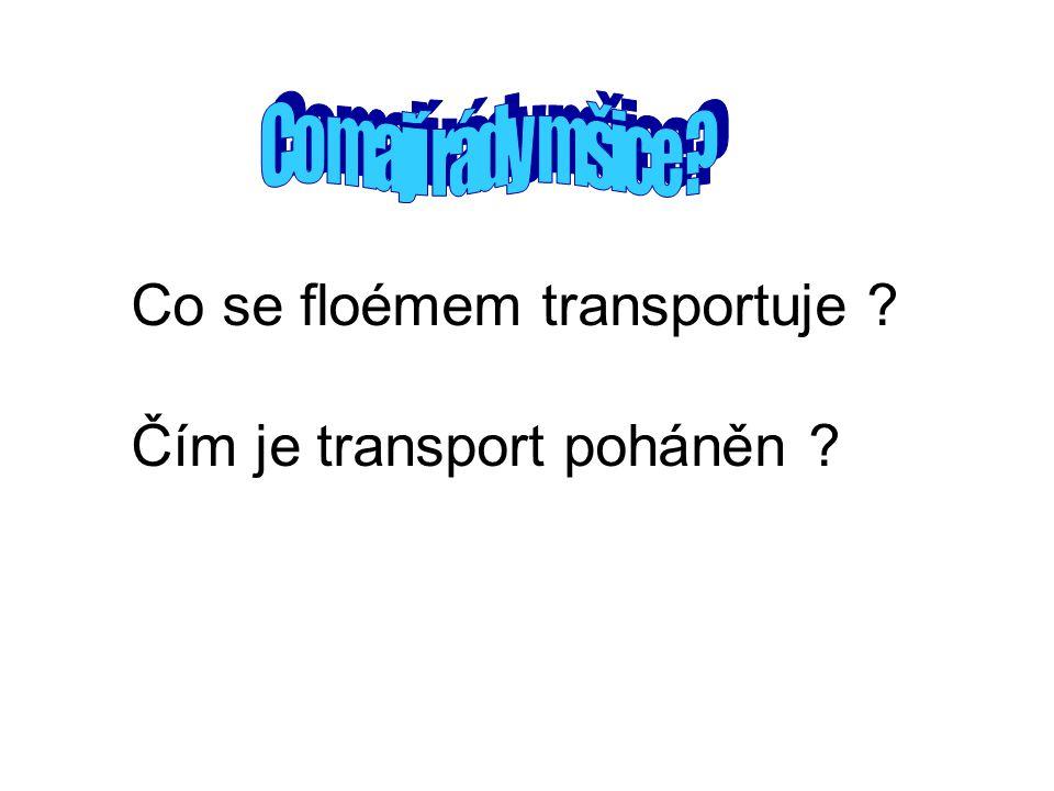 Co se floémem transportuje ? Čím je transport poháněn ?