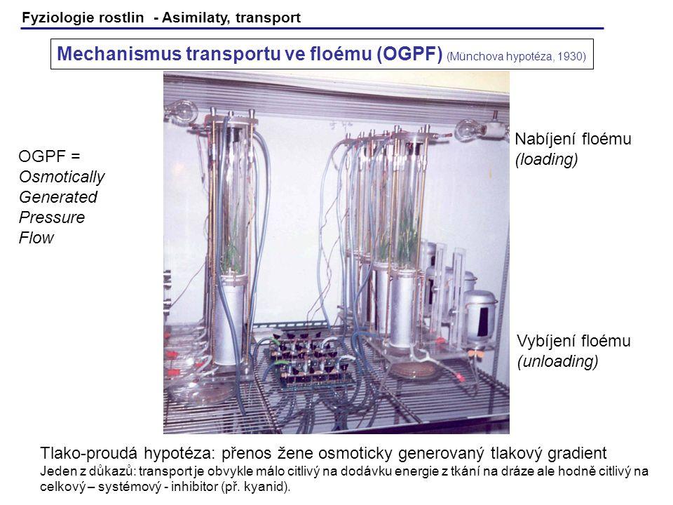 Fyziologie rostlin - Asimilaty, transport Mechanismus transportu ve floému (OGPF) (Münchova hypotéza, 1930) Nabíjení floému (loading) Vybíjení floému