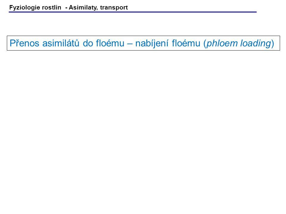 Fyziologie rostlin - Asimilaty, transport Přenos asimilátů do floému – nabíjení floému (phloem loading)