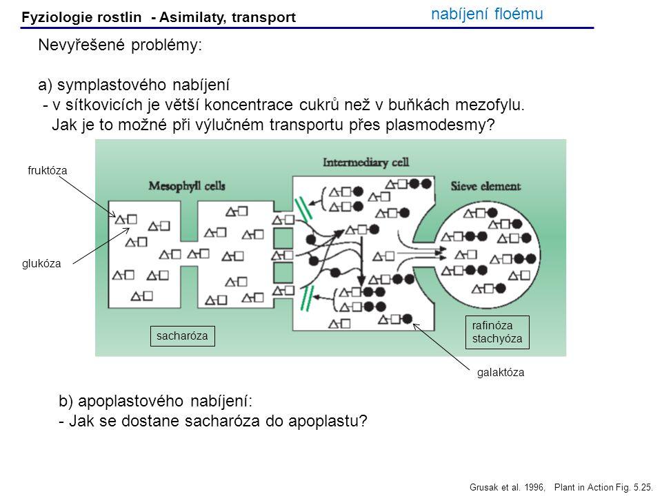 Fyziologie rostlin - Asimilaty, transport Nevyřešené problémy: a) symplastového nabíjení - v sítkovicích je větší koncentrace cukrů než v buňkách mezo