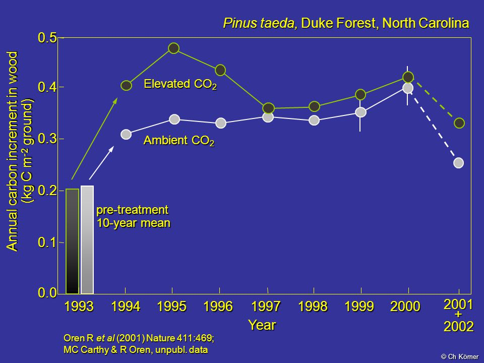 Annual carbon increment in wood (kg C m - 2 ground) Oren R et al (2001) Nature 411:469; MC Carthy & R Oren, unpubl. data Year 0.0 0.1 0.2 0.3 0.40.5pr