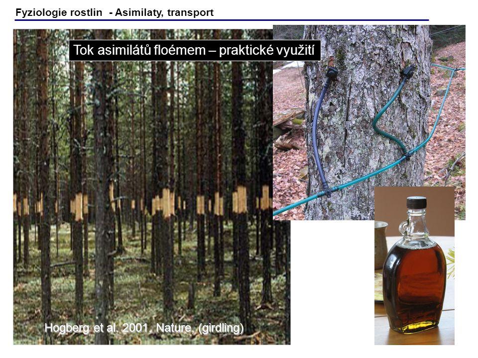 Fyziologie rostlin - Asimilaty, transport Hogberg et al. 2001, Nature, (girdling) Tok asimilátů floémem – praktické využití