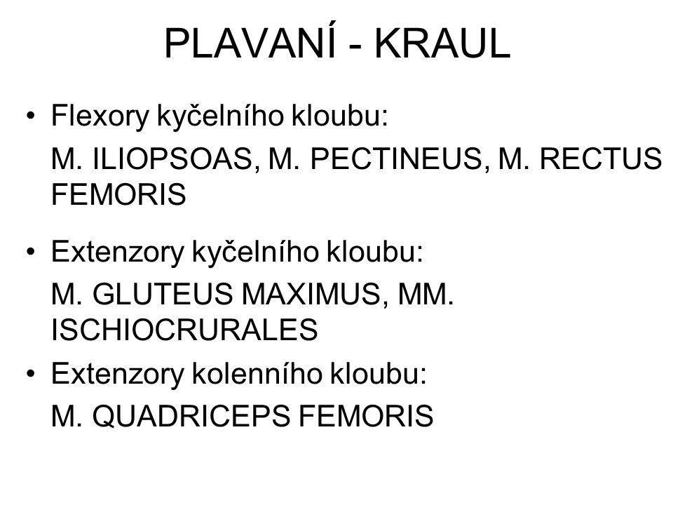 Flexory kyčelního kloubu: M. ILIOPSOAS, M. PECTINEUS, M. RECTUS FEMORIS Extenzory kyčelního kloubu: M. GLUTEUS MAXIMUS, MM. ISCHIOCRURALES Extenzory k