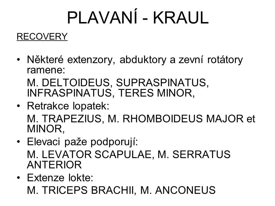 Flexory kyčelního kloubu: M.ILIOPSOAS, M. PECTINEUS, M.