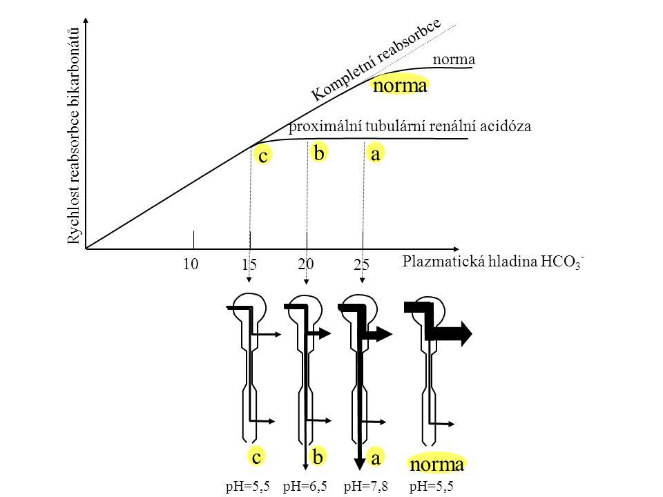 10 15 20 25 Rychlost reabsorbce bikarbonátů Plazmatická hladina HCO 3 - pH=5,5pH=6,5pH=7,8 Kompletní reabsorbce norma proximální tubulární renální aci