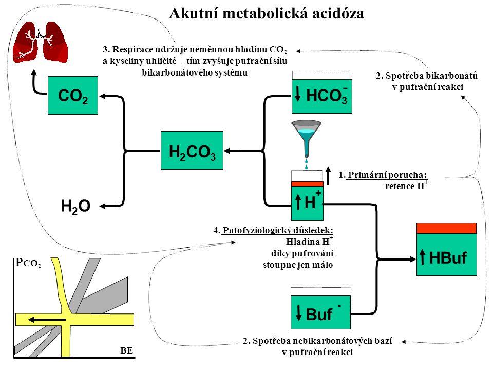 CO 2 H2OH2O H 2 CO 3 HCO 3 H+H+ 3. Respirace udržuje neměnnou hladinu CO 2 a kyseliny uhličité - tím zvyšuje pufrační sílu bikarbonátového systému 1.