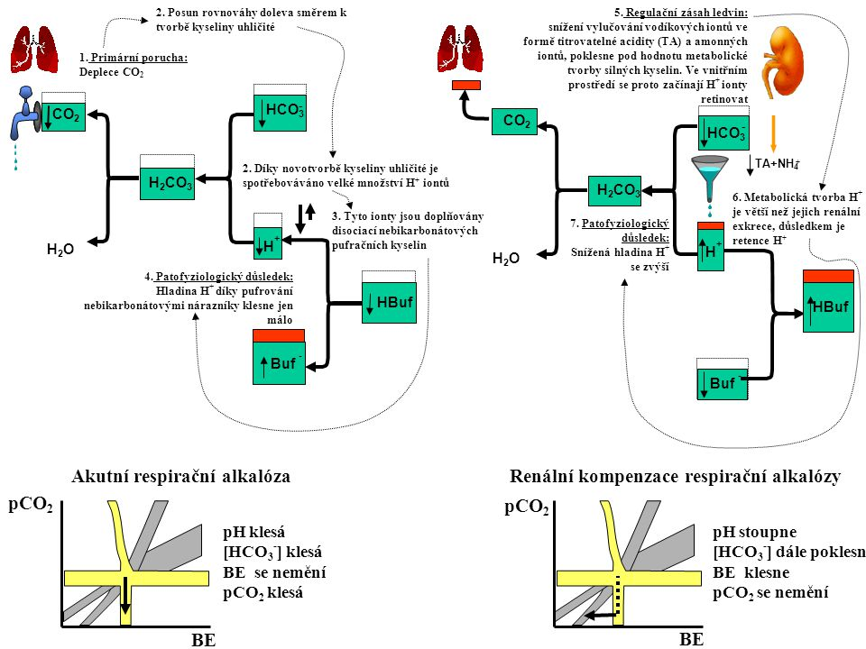 CO 2 H2OH2O H 2 CO 3 3. Tyto ionty jsou doplňovány disociací nebikarbonátových pufračních kyselin 1. Primární porucha: Deplece CO 2 4. Patofyziologick