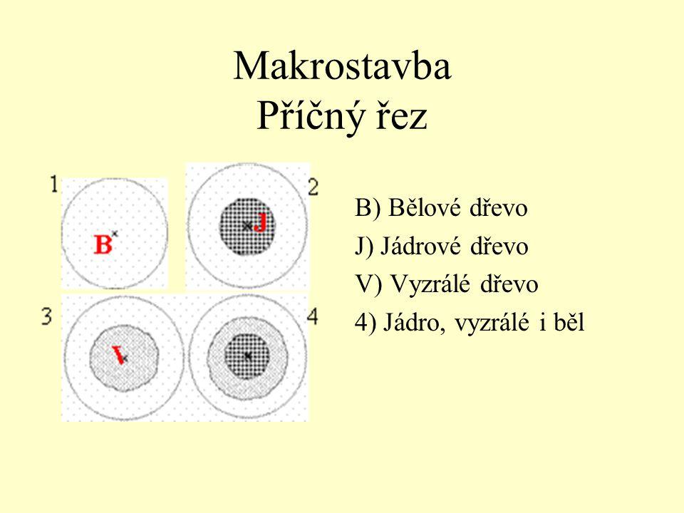 Makrostavba Příčný řez B) Bělové dřevo J) Jádrové dřevo V) Vyzrálé dřevo 4) Jádro, vyzrálé i běl