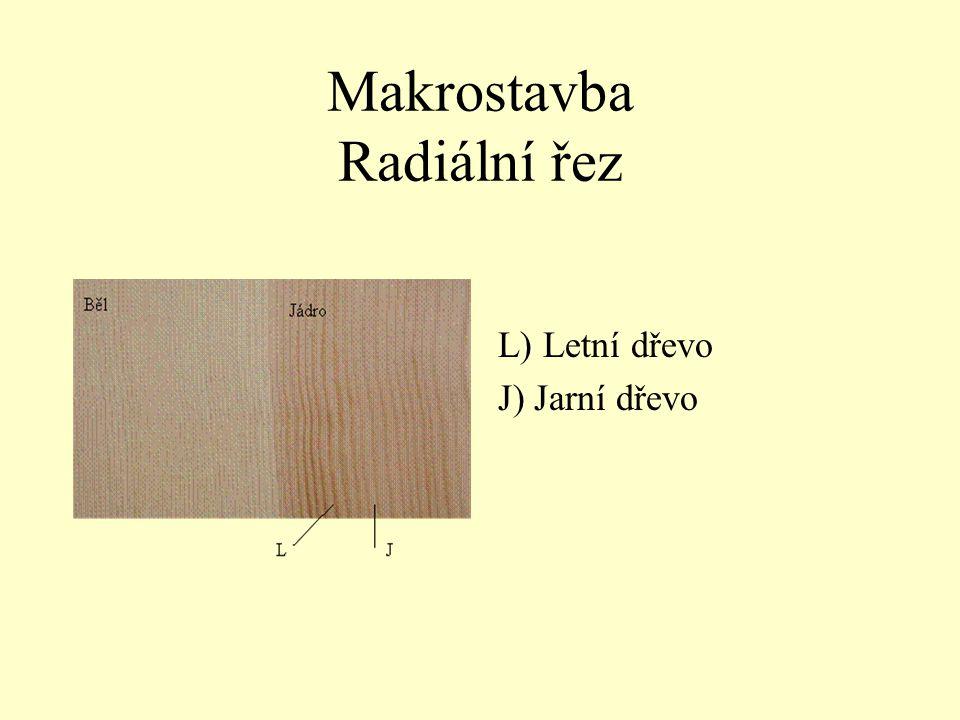 Makrostavba Radiální řez L) Letní dřevo J) Jarní dřevo