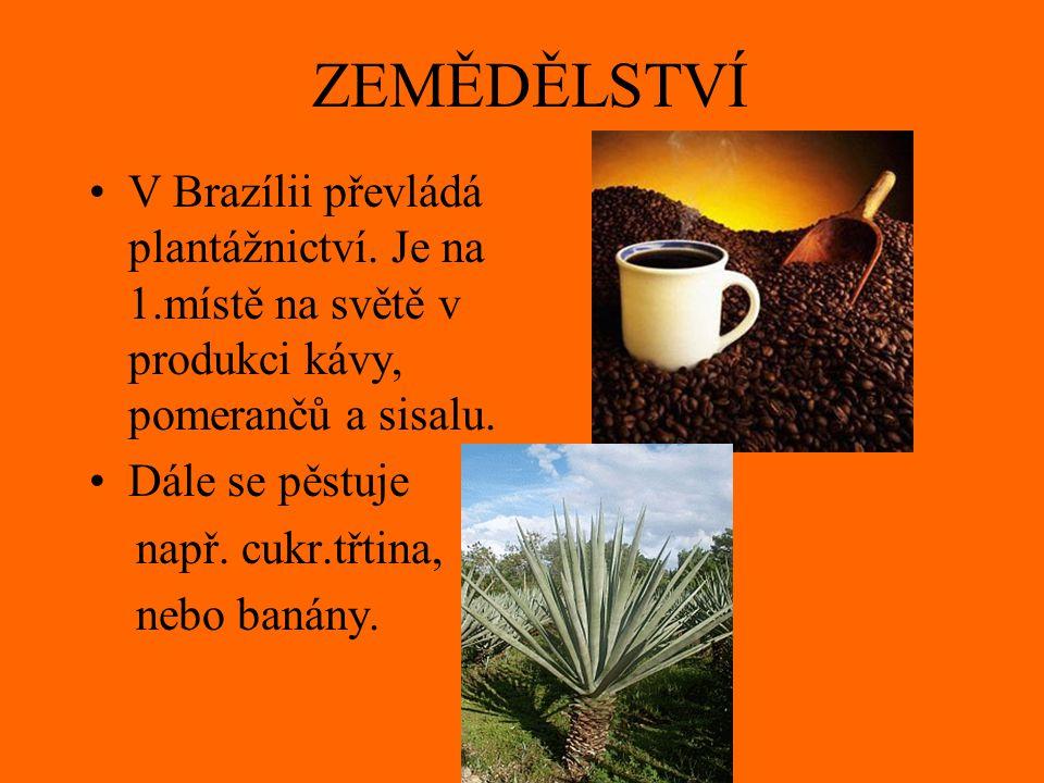 ZEMĚDĚLSTVÍ V Brazílii převládá plantážnictví. Je na 1.místě na světě v produkci kávy, pomerančů a sisalu. Dále se pěstuje např. cukr.třtina, nebo ban