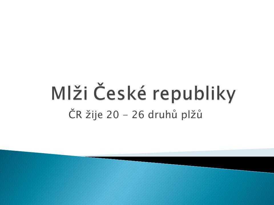 ČR žije 20 - 26 druhů plžů