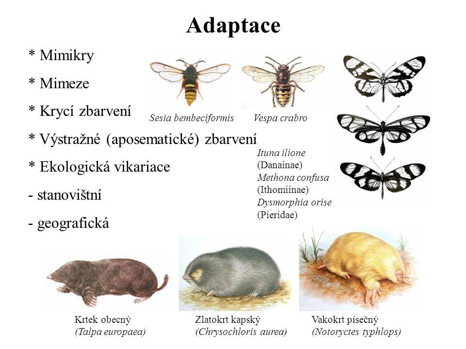 Adaptace * Mimikry * Mimeze * Krycí zbarvení * Výstražné (aposematické) zbarvení * Ekologická vikariace - stanovištní - geografická Krtek obecný (Talp