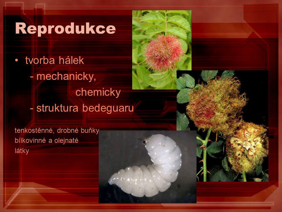 Reprodukce tvorba hálek - mechanicky, chemicky - struktura bedeguaru tenkostěnné, drobné buňky, bílkovinné a olejnaté látky