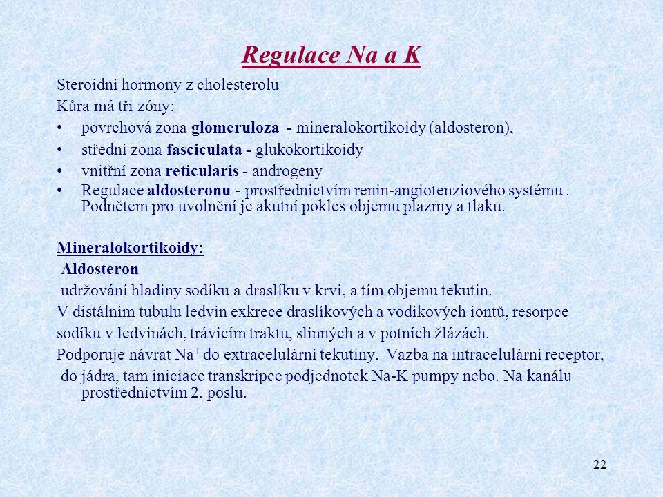 22 Regulace Na a K Steroidní hormony z cholesterolu Kůra má tři zóny: povrchová zona glomeruloza - mineralokortikoidy (aldosteron), střední zona fasci