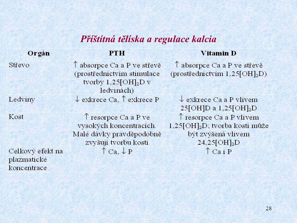 28 Příštítná tělíska a regulace kalcia