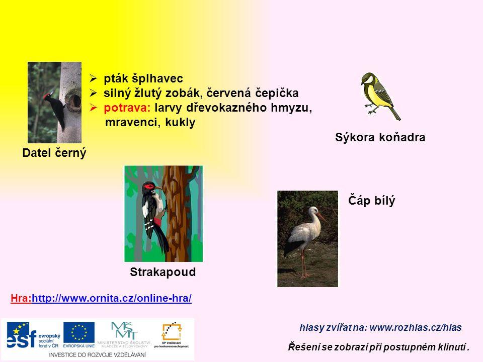 """Vlaštovka obecná  """"fráček"""", ocasní pera – vidlice  hmyz loví v letu  černá, červené hrdlo, bílé bříško  hnízdo miskovité  rychlý, obratný vytrval"""