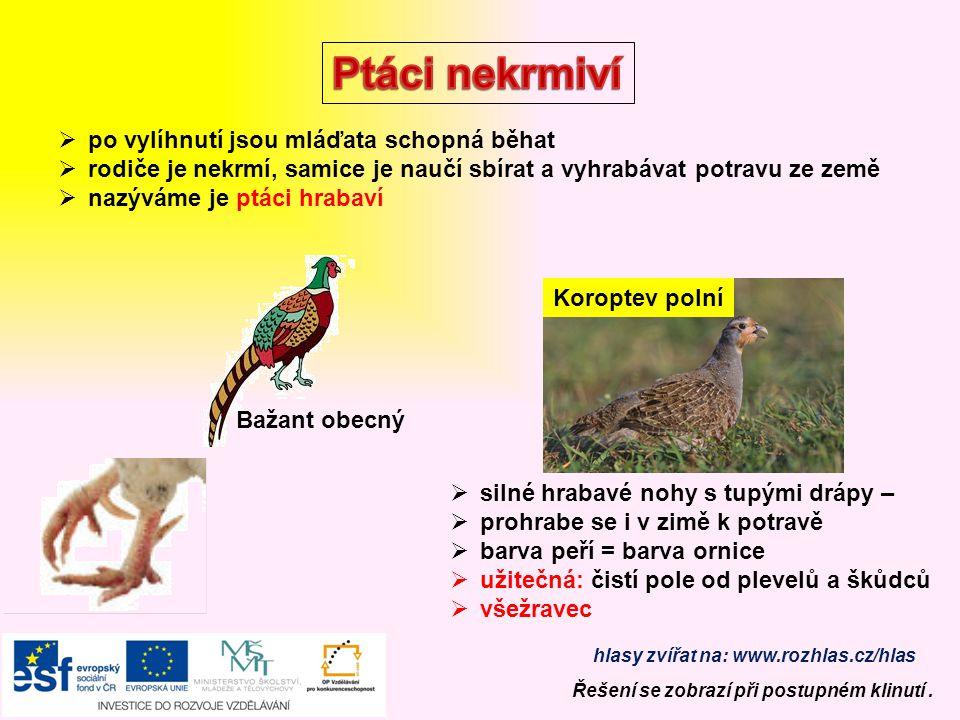 Sýkora koňadra  pták šplhavec  silný žlutý zobák, červená čepička  potrava: larvy dřevokazného hmyzu, mravenci, kukly Datel černý Strakapoud Čáp bí