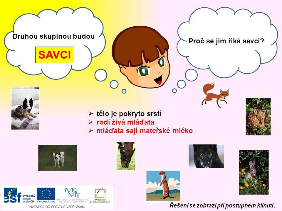 Labuť velká Husa domácí Kachna divoká Řešení se zobrazí při postupném klinutí. hlasy zvířat na: www.rozhlas.cz/hlas