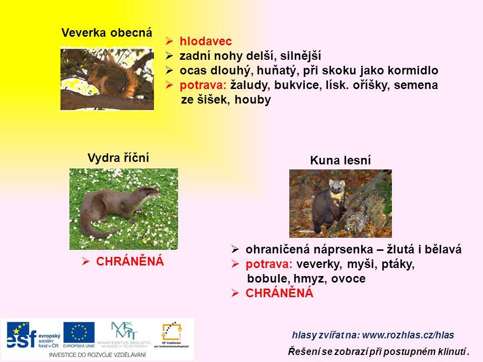 Prase divoké  všežravec, jemný čich  potrava: lesní plody, kořínky, brambory larvy, kukly hmyzu, myši, vajíčka ptáků  lovná zvěř  býložravec  je