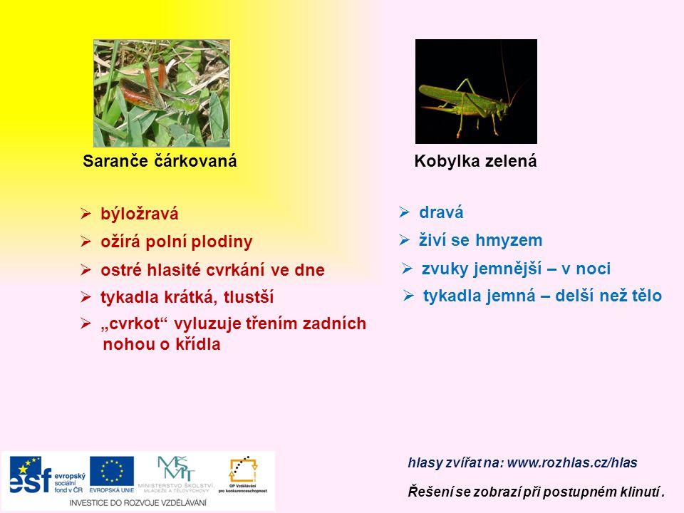 Mšice Slunéčko sedmitečné  dravý brouk = užitečný  ochrana proti nepřátelům – žlutá, hořká, páchnoucí tekutina  žlutá vajíčka – larvy – kukla – nov