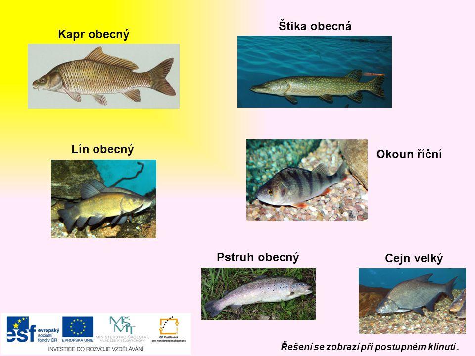 Ahoj, Čtvrtou skupinou budou RYBY Ahoj, V našich vodách jsou jaké ryby? SLADKOVODNÍ Řešení se zobrazí při postupném klinutí.
