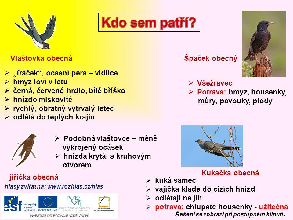 zdroje Soubor:Accipiter gentilisAAP045CA.jpg.In: Wikipedia: the free encyclopedia [online].
