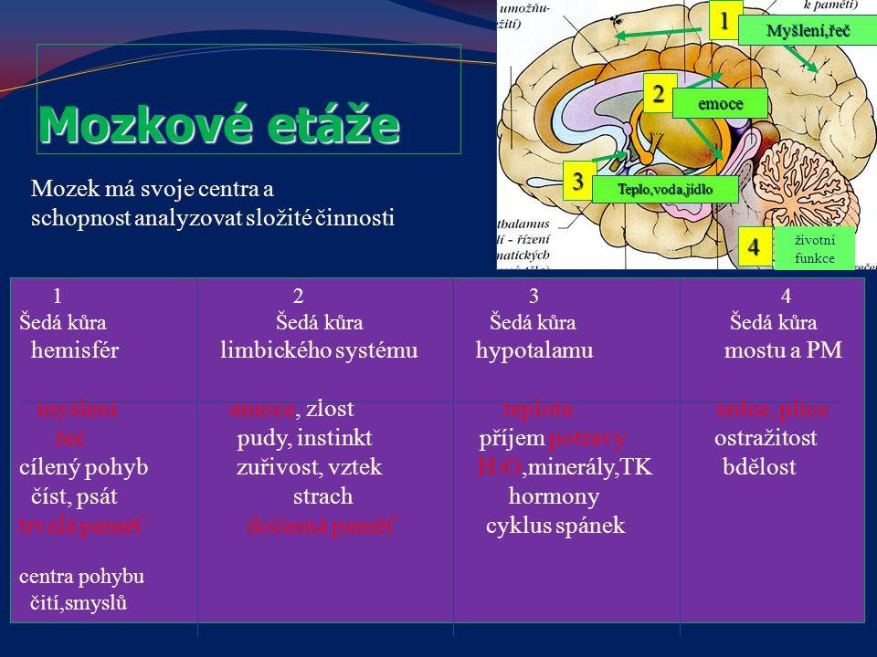 1 2 3 4 Šedá kůra Šedá kůra hemisfér limbického systému hypotalamu mostu a PM myšlení emoce, zlost teplota srdce, plíce řeč pudy, instinkt příjem potr