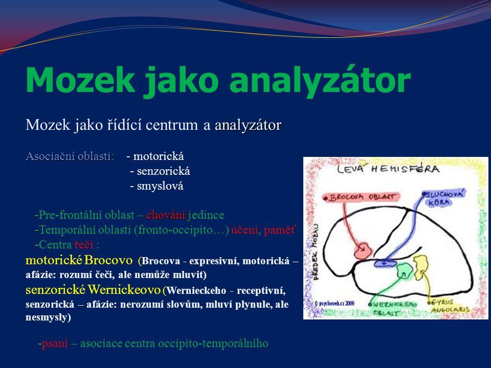 Mozek jako analyzátor analyzátor Mozek jako řídící centrum a analyzátor Asociační oblasti: - Asociační oblasti: - motorická - senzorická - smyslová -–