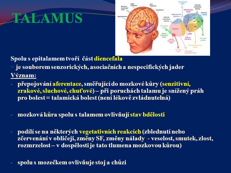 TALAMUS Spolu s epitalamem tvoří část diencefala = je souborem senzorických, asociačních a nespecifických jader Význam: - přepojování aferentace, směř