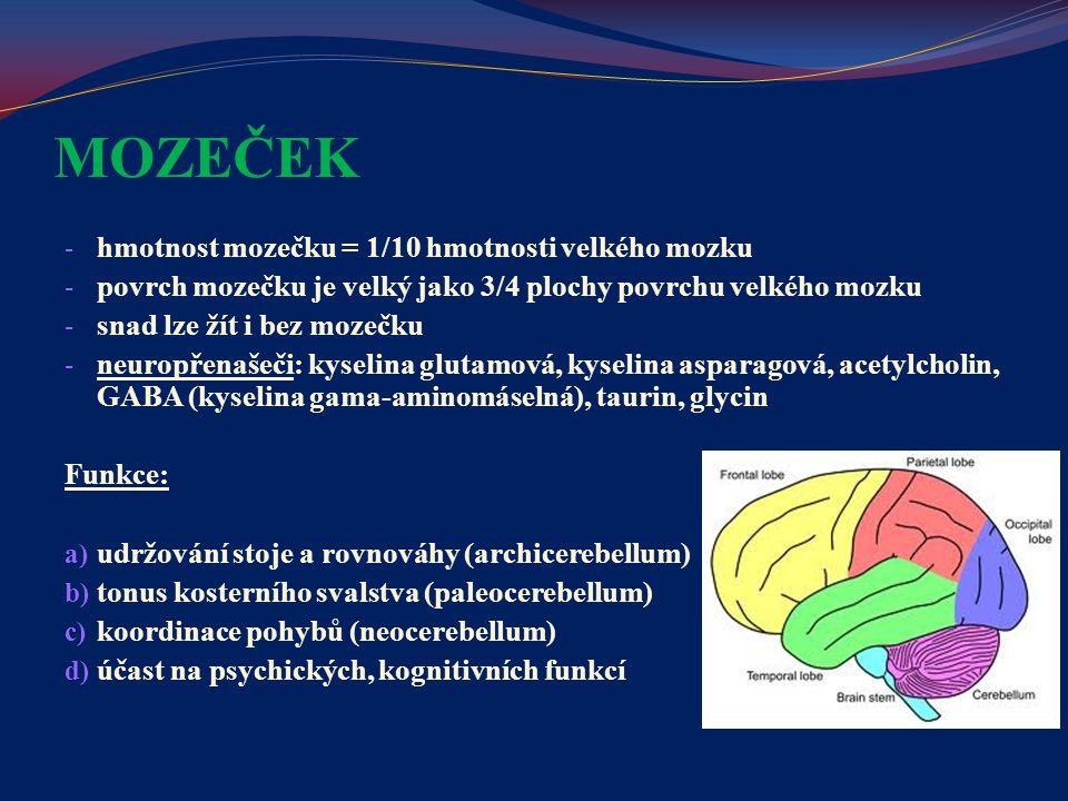 MOZEČEK - hmotnost mozečku = 1/10 hmotnosti velkého mozku - povrch mozečku je velký jako 3/4 plochy povrchu velkého mozku - snad lze žít i bez mozečku