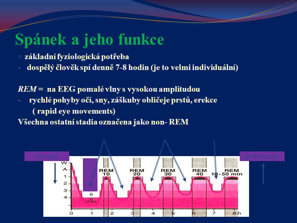 Spánek a jeho funkce = základní fyziologická potřeba - dospělý člověk spí denně 7-8 hodin (je to velmi individuální) REM = na EEG pomalé vlny s vysoko