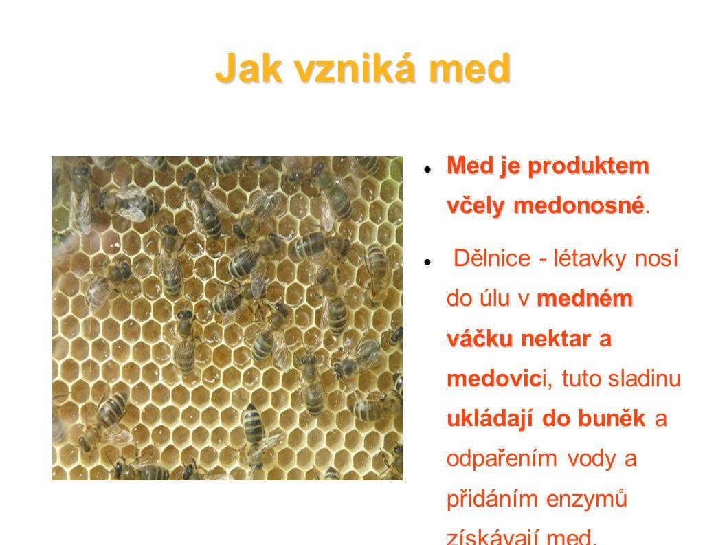 Jak vzniká med Med je produktem včely medonosné Med je produktem včely medonosné. medném váčku Dělnice - létavky nosí do úlu v medném váčku nektar a m