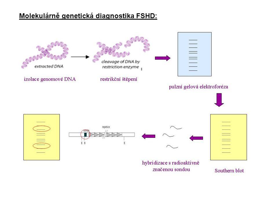 Molekulárně genetická diagnostika FSHD: