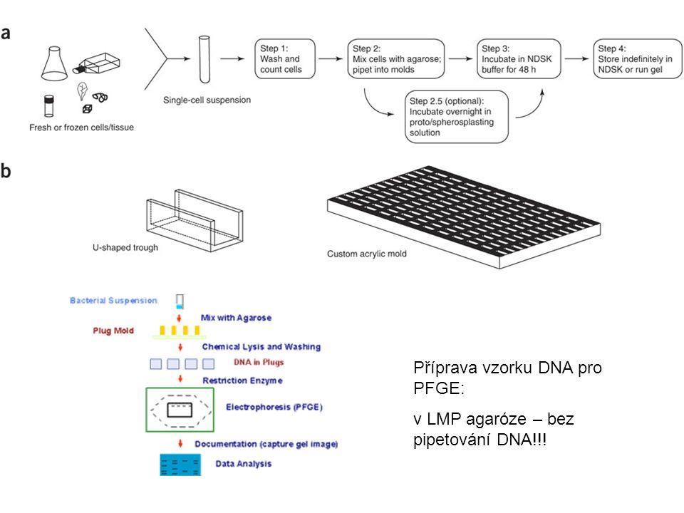 Příprava vzorku DNA pro PFGE: v LMP agaróze – bez pipetování DNA!!!