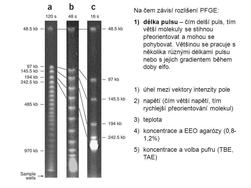 Na čem závisí rozlišení PFGE: 1)délka pulsu – čím delší puls, tím větší molekuly se stihnou přeorientovat a mohou se pohybovat.