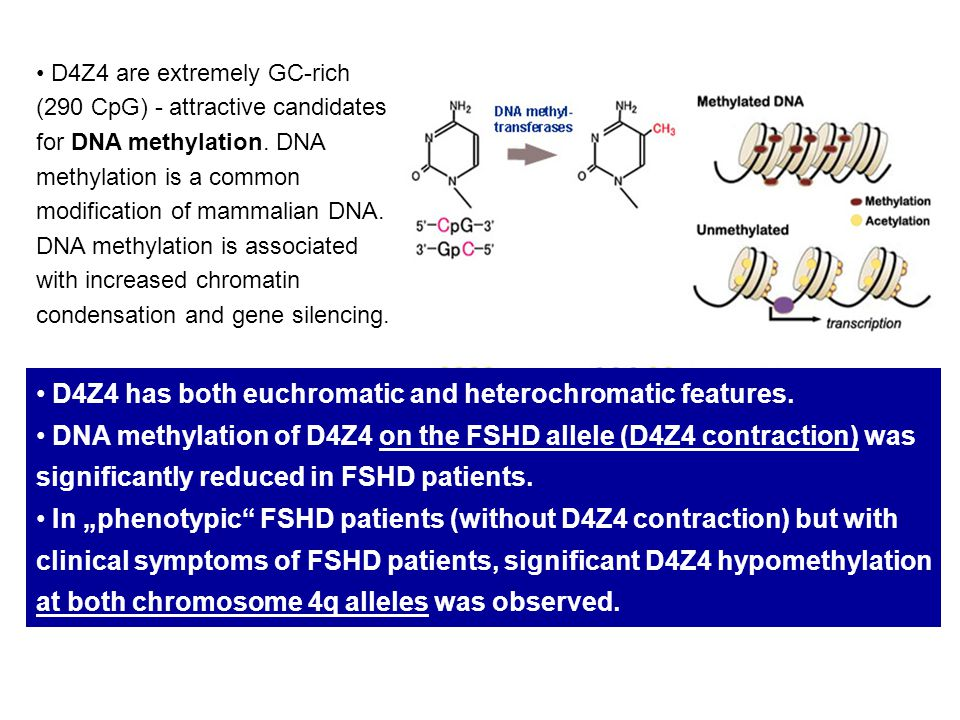 D4Z4 are extremely GC-rich (290 CpG) - attractive candidates for DNA methylation. DNA methylation is a common modification of mammalian DNA. DNA methy