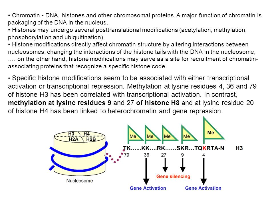 Chromatin - DNA, histones and other chromosomal proteins. A major function of chromatin is packaging of the DNA in the nucleus. Histones may undergo s