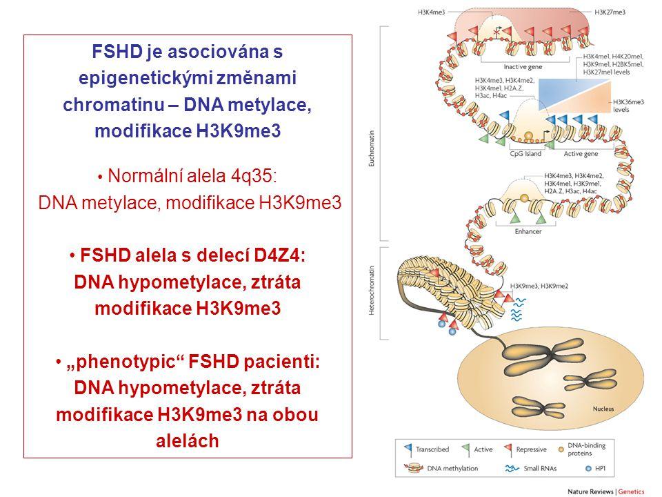 """FSHD je asociována s epigenetickými změnami chromatinu – DNA metylace, modifikace H3K9me3 Normální alela 4q35: DNA metylace, modifikace H3K9me3 FSHD alela s delecí D4Z4: DNA hypometylace, ztráta modifikace H3K9me3 """"phenotypic FSHD pacienti: DNA hypometylace, ztráta modifikace H3K9me3 na obou alelách"""