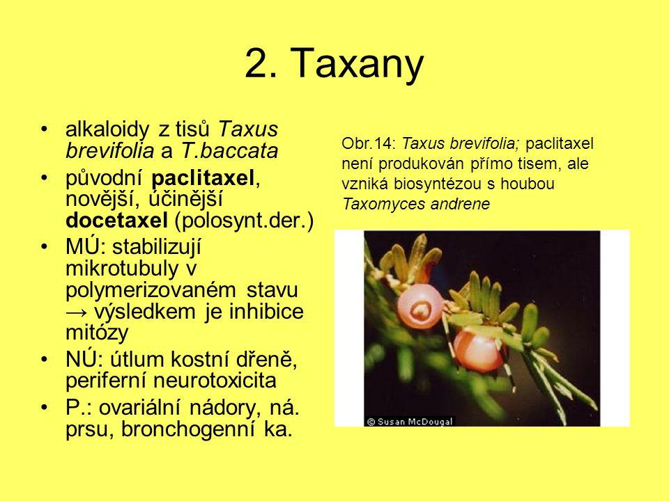 2. Taxany alkaloidy z tisů Taxus brevifolia a T.baccata původní paclitaxel, novější, účinější docetaxel (polosynt.der.) MÚ: stabilizují mikrotubuly v