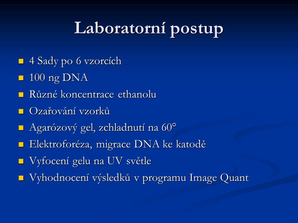 Laboratorní postup 4 Sady po 6 vzorcích 4 Sady po 6 vzorcích 100 ng DNA 100 ng DNA Různé koncentrace ethanolu Různé koncentrace ethanolu Ozařování vzo