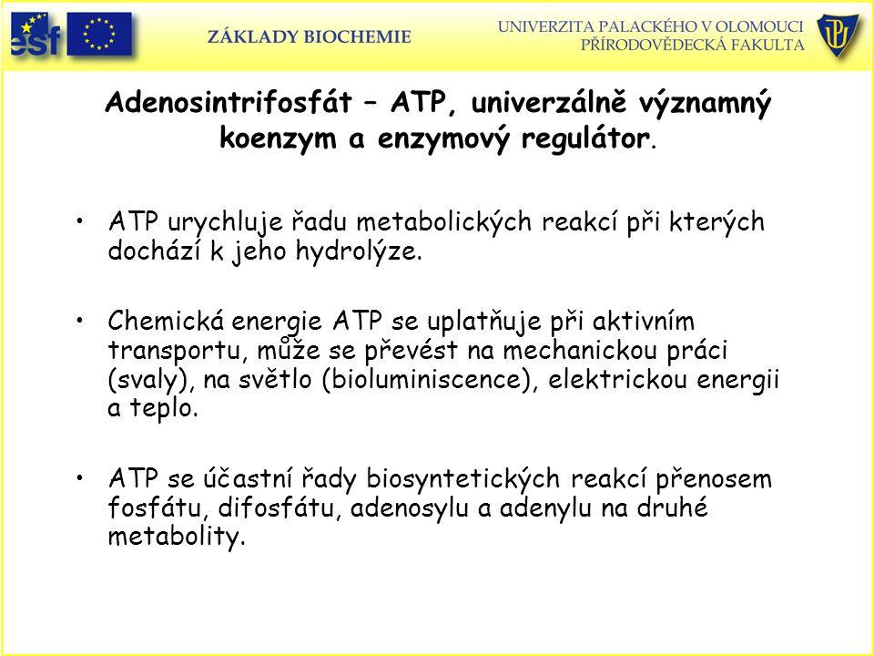 Adenosintrifosfát – ATP, univerzálně významný koenzym a enzymový regulátor. ATP urychluje řadu metabolických reakcí při kterých dochází k jeho hydrolý