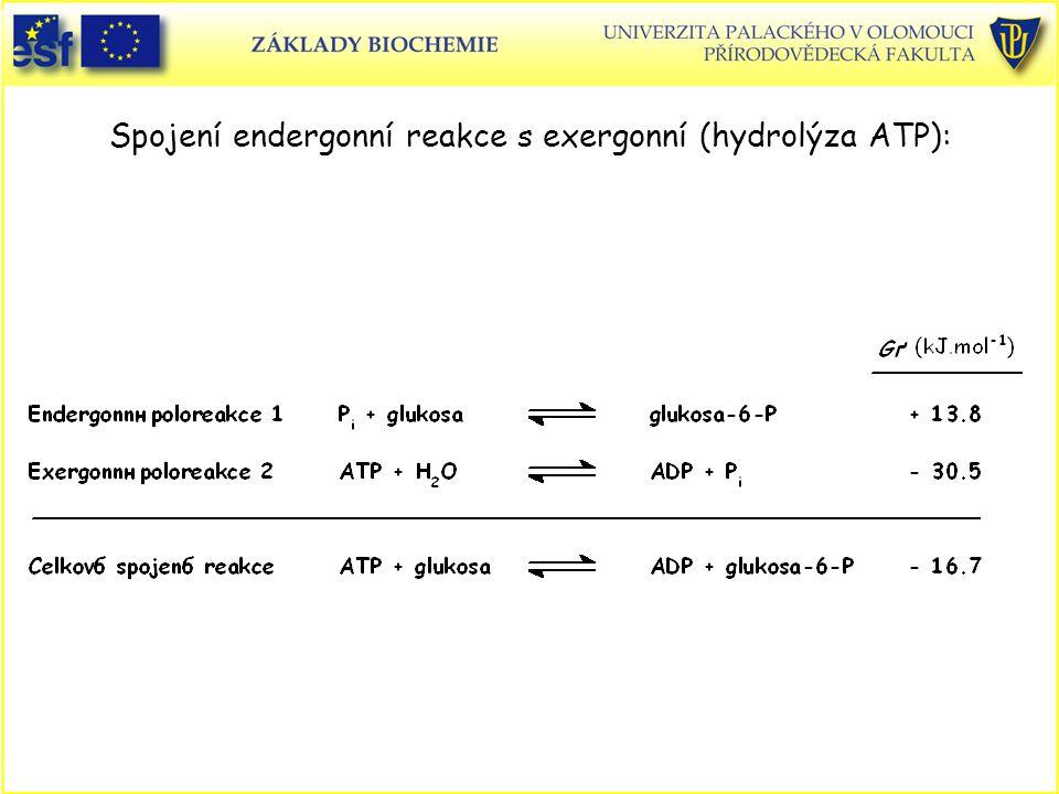 Spojení endergonní reakce s exergonní (hydrolýza ATP):