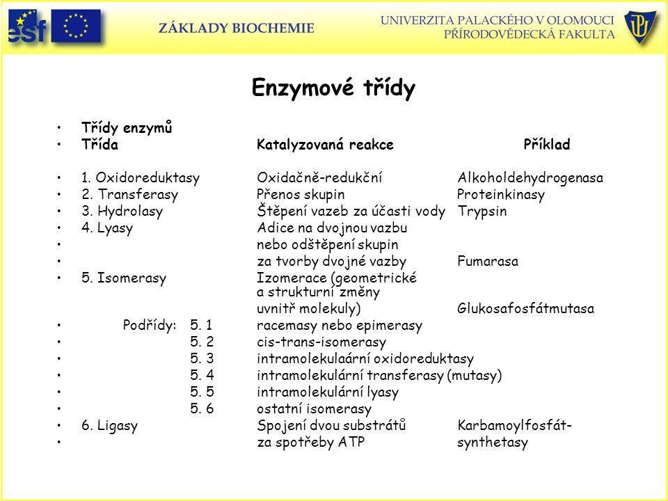 Enzymové třídy Třídy enzymů Třída Katalyzovaná reakcePříklad 1. OxidoreduktasyOxidačně-redukčníAlkoholdehydrogenasa 2. TransferasyPřenos skupinProtein