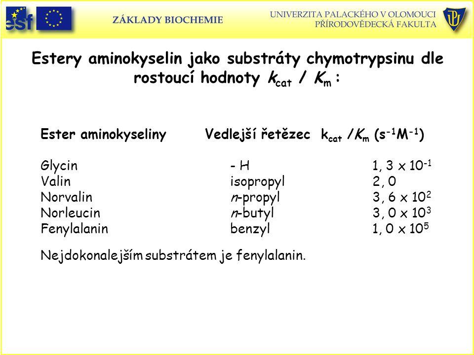 Estery aminokyselin jako substráty chymotrypsinu dle rostoucí hodnoty k cat / K m : Ester aminokyseliny Vedlejší řetězec k cat /K m (s -1 M -1 ) Glycin- H 1, 3 x 10 -1 Valin isopropyl2, 0 Norvalinn-propyl3, 6 x 10 2 Norleucinn-butyl3, 0 x 10 3 Fenylalaninbenzyl1, 0 x 10 5 Nejdokonalejším substrátem je fenylalanin.