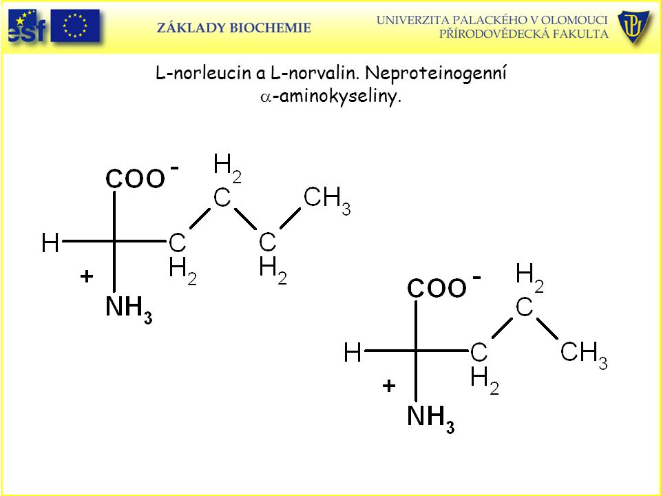 L-norleucin a L-norvalin. Neproteinogenní  -aminokyseliny.