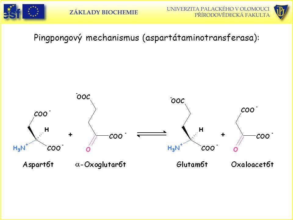 Pingpongový mechanismus (aspartátaminotransferasa):