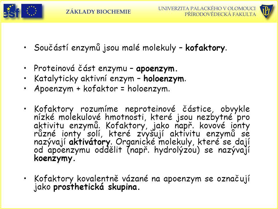 Součástí enzymů jsou malé molekuly – kofaktory. Proteinová část enzymu – apoenzym. Katalyticky aktivní enzym – holoenzym. Apoenzym + kofaktor = holoen