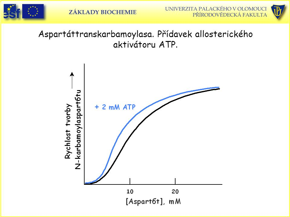 Aspartáttranskarbamoylasa. Přídavek allosterického aktivátoru ATP.