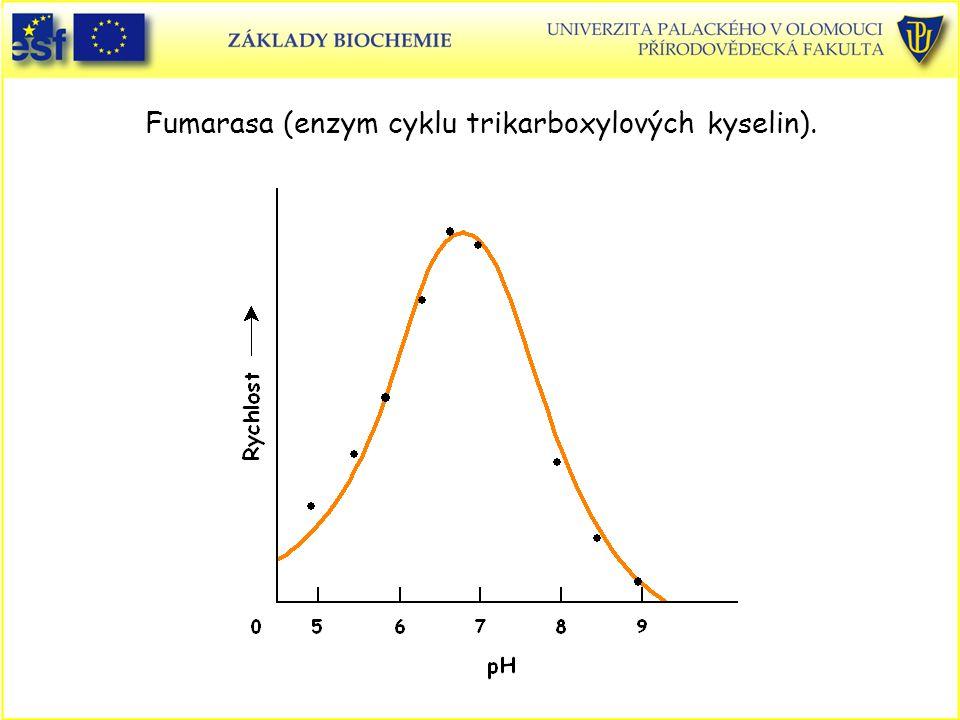 Fumarasa (enzym cyklu trikarboxylových kyselin).