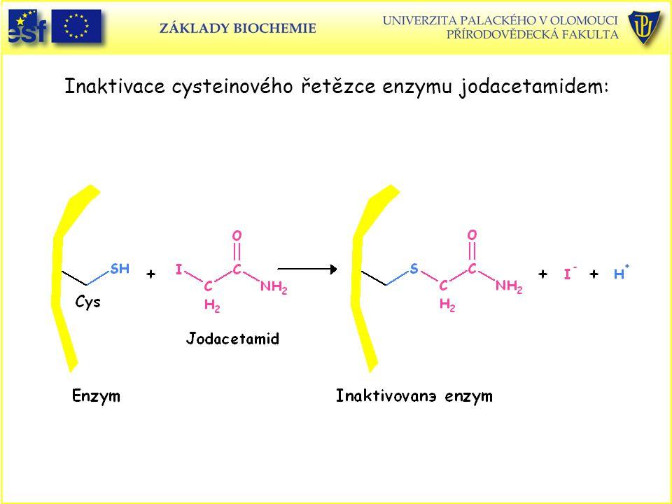 Inaktivace cysteinového řetězce enzymu jodacetamidem: